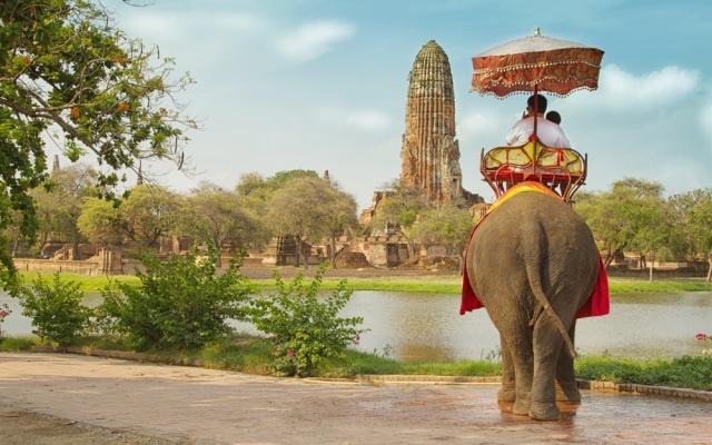 Thajští sloni