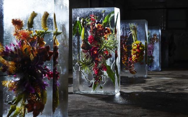 Květiny v ledu