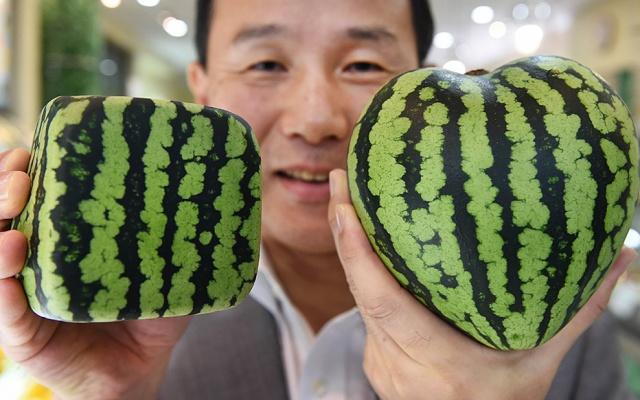 Takovýto pěkný melounek může stát i přes 6 000 korun