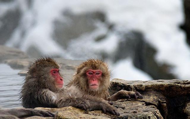 Opičáci v lázni