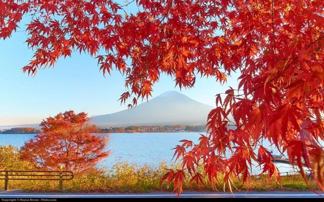 japonské jezero Kawagučiko a hora Fudži