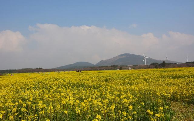 Ostrov Jeju