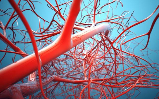 Cévy budou mikrorobotům sloužit k jejich přepravě