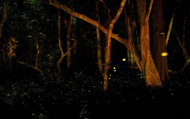 Světlušky
