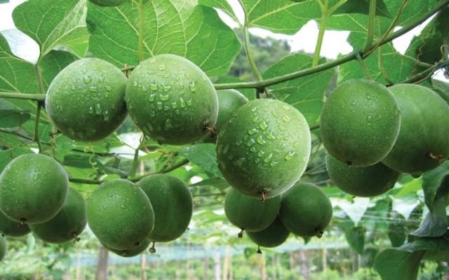 Buddhovo ovoce