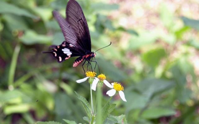 Motýl ve Vietnamu