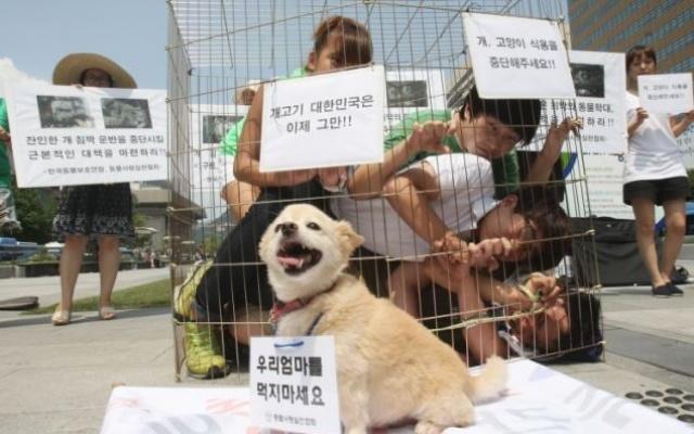 Fotka z protestu proti jedeniu psov