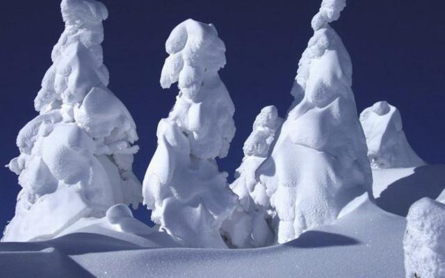 Snehom zaviate stromy na hore Zao