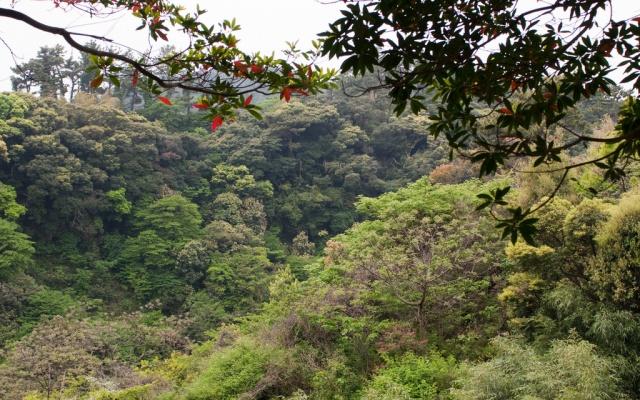 Krásná příroda v Seogwipo