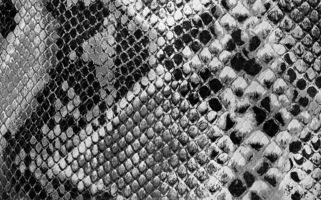 Kůže hada