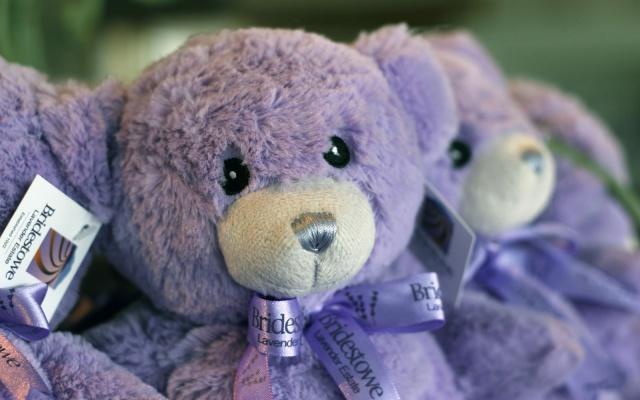 Medvídek Bobbie - hit čínského trhu