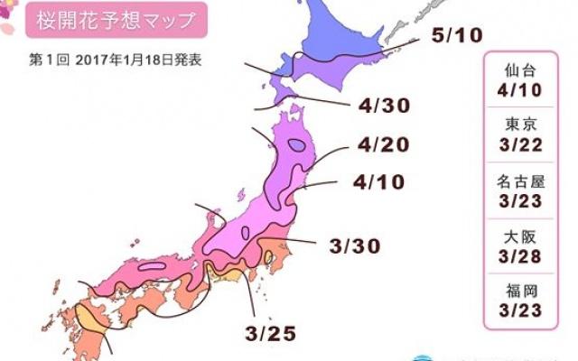 Mapa s daty předpovědí, kdy a kde rozkvetou první sakury