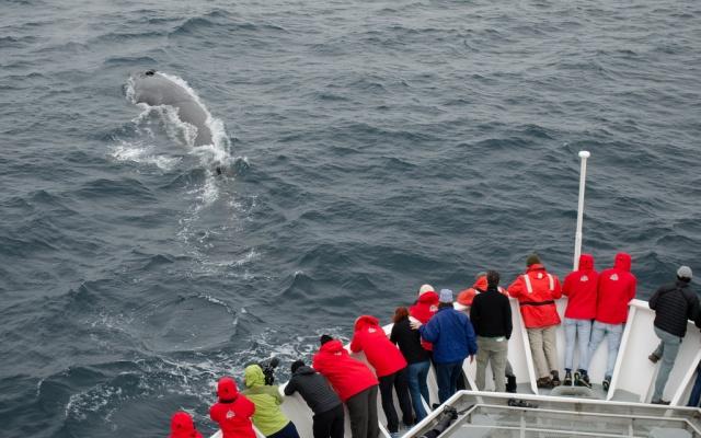 Nebylo by lepší velryby pouze pozorovat?