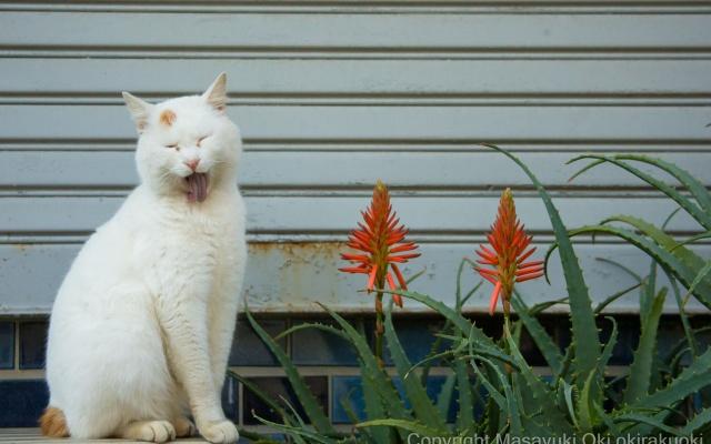 Portréty túlavých mačiek v Tokiu od Masayuki Oki