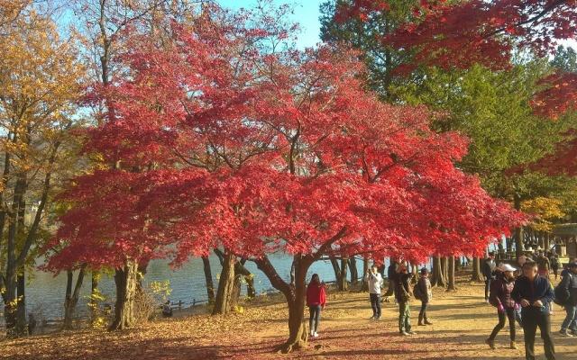 Podzim na Nami