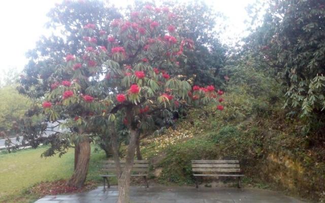 Jeden z mnoha druhů rododendronů, které najdete v Baili.