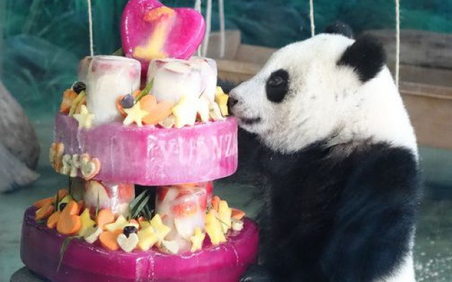 Panda a její narozeninový dort