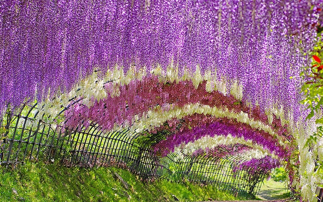 Květinový tunel