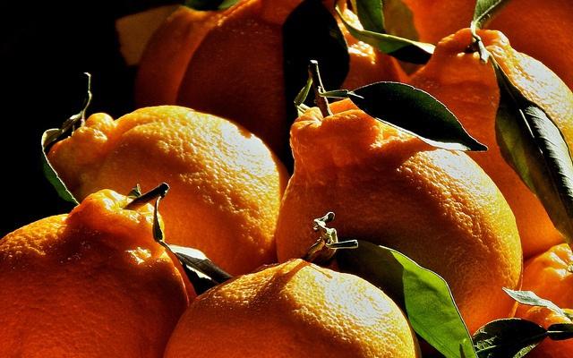 Citrusy z Jeju