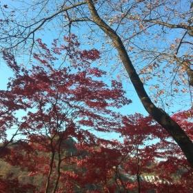 Překrásné podzimní barvy.