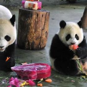 Yuan Zai se o dort dělí s maminkou Yuan Yuan