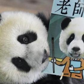 Zhua Zhou kartička učitele