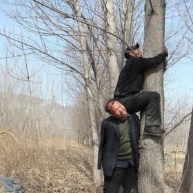 Je třeba odžíznout větve stromu, které se následně budou sázet.